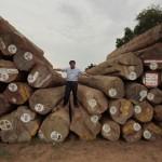 ハイグレードのチーク原木